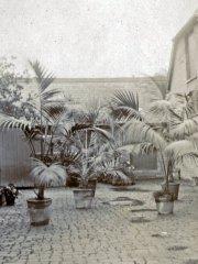 33b-Plants-in-courtyardComp.jpg