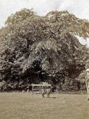 38b-PJE--Dog-in-GardenComp.jpg